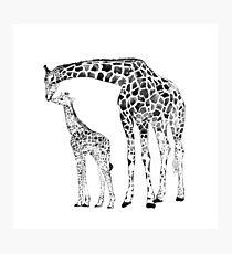 Giraffe, black and white Photographic Print