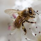 Busy Bee by Adam1965
