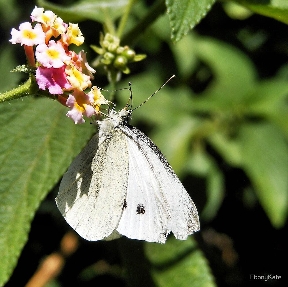 White Butterfly by EbonyKate
