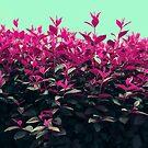 Pink Spring by DejaReve
