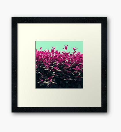Pink Spring Framed Print