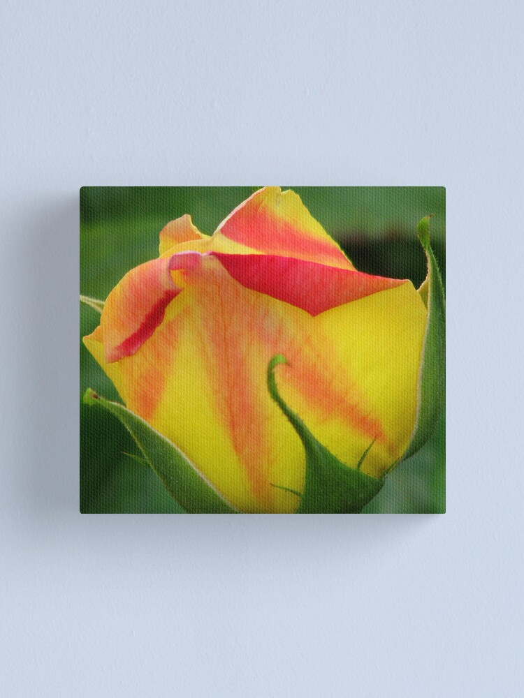 Alternate view of Big Bud Canvas Print