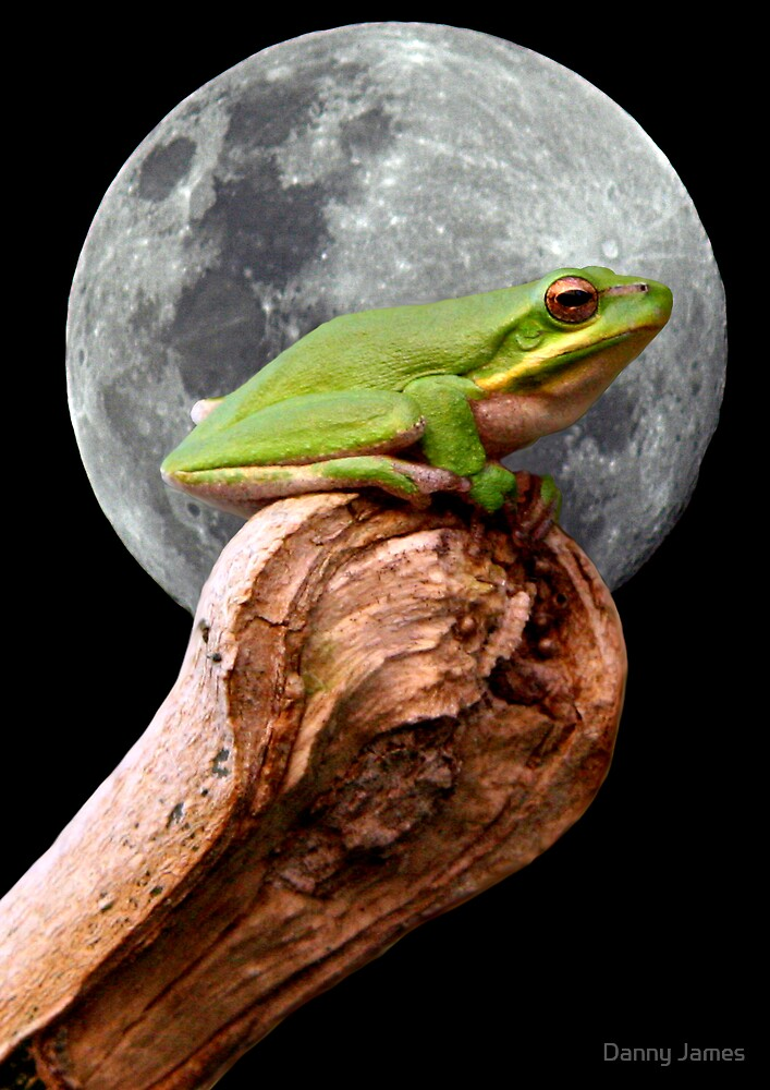 Frog in the Moon by Danny James