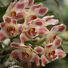 Beautiful Flowers by Kimberly Johnson