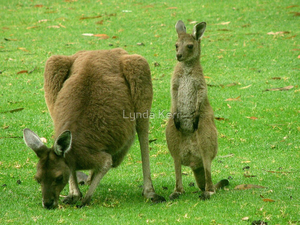 Joey with Mum 1 by Lynda Kerr
