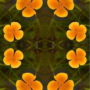 Evening Primrose by heatherbuckley