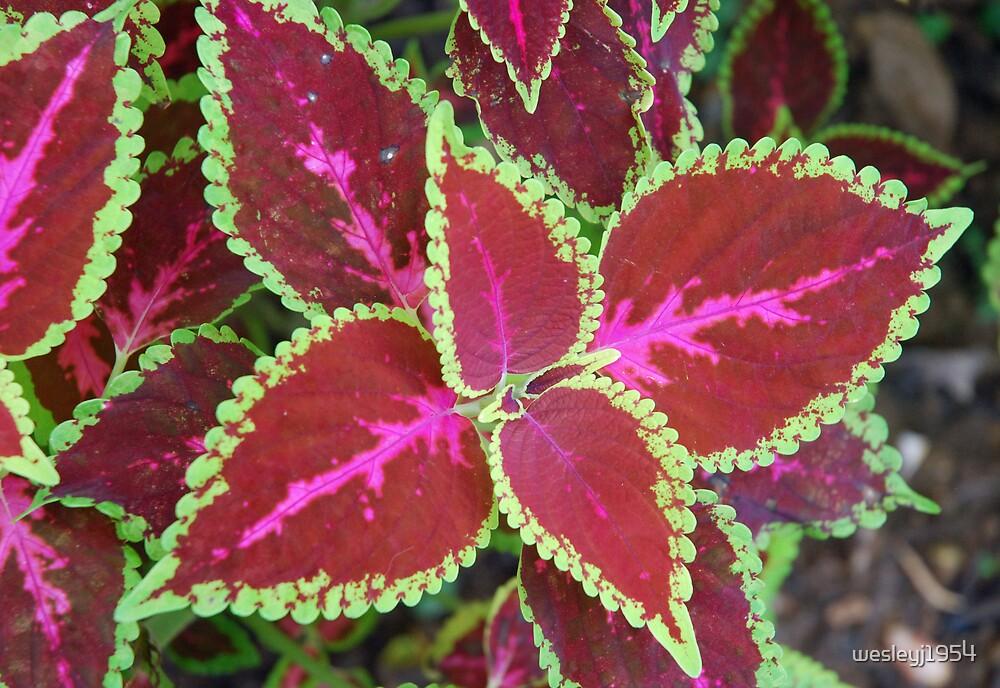 Coloured leaves by wesleyj1954