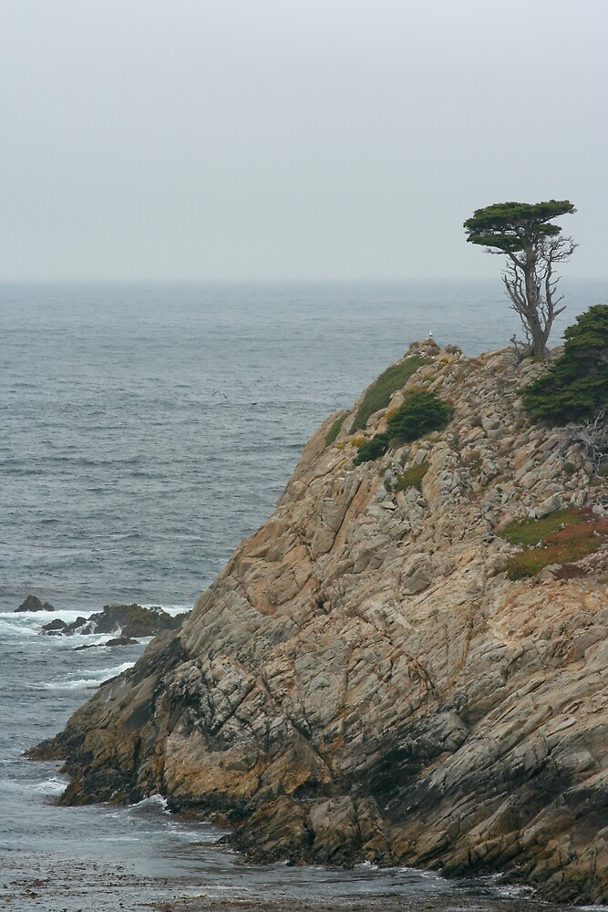 Lone Tree by Chris Clarke