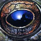 Reflections in a frog's eye by Hope Martin