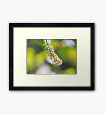 """ Tiny Florets "" Framed Print"