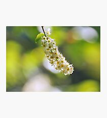 """ Tiny Florets "" Photographic Print"