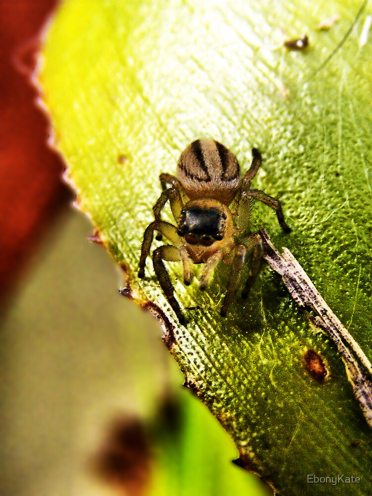 Jumping Spider by EbonyKate
