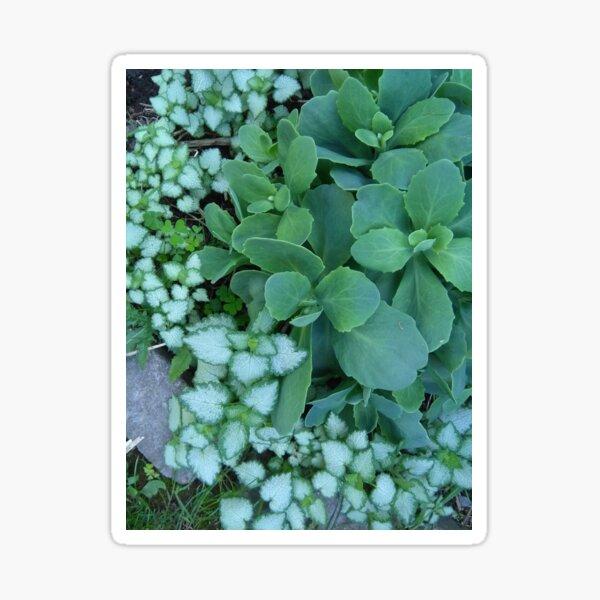 Green Leaves - Photo by REKHA IYERN FE RECORDS CANADA Sticker
