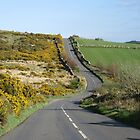 The Open Road, High Dartmoor by lezvee
