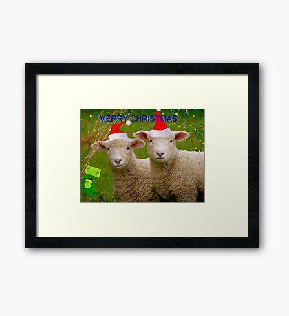 Merry Christmas - Lambs - NZ Framed Print
