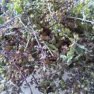 Tiny Dried Leaves - Photo by REKHA by REKHA Iyern [Fe] Records Canada