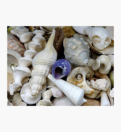 Secret Life of Shells Photographic Print