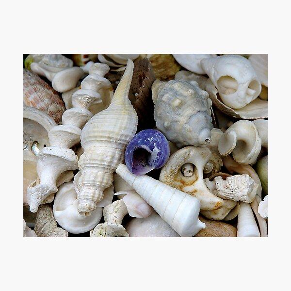 Secret Life of Shells Photographic Print