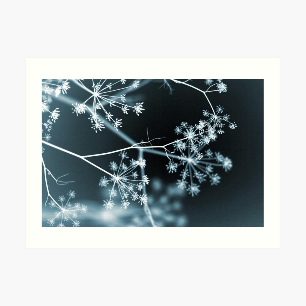 Midnight Glow. Dark Floral Art Print