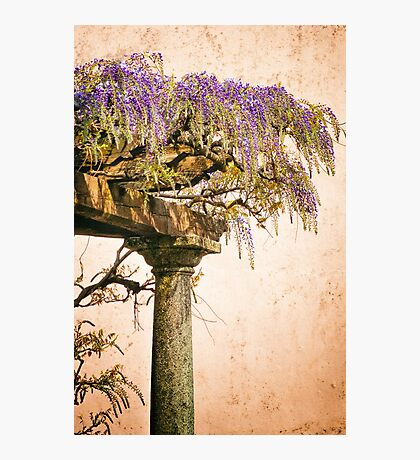 Porch with Wisteria Photographic Print