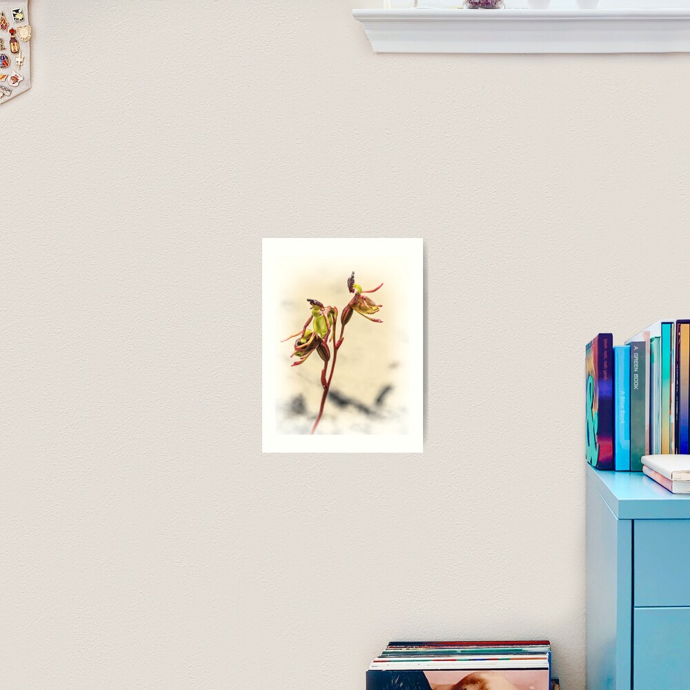 Small Duck Orchid Art Print