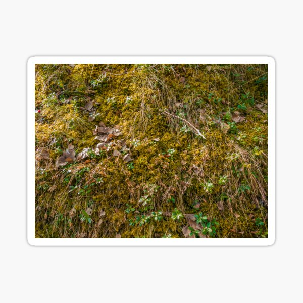 Camouflage Leaves and Moss Sticker