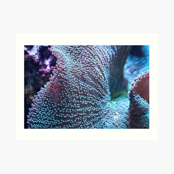 Haddon's Carpet Sea Anemone, Blue/Green Art Print