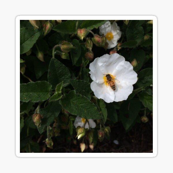 Bee Rosy Sticker