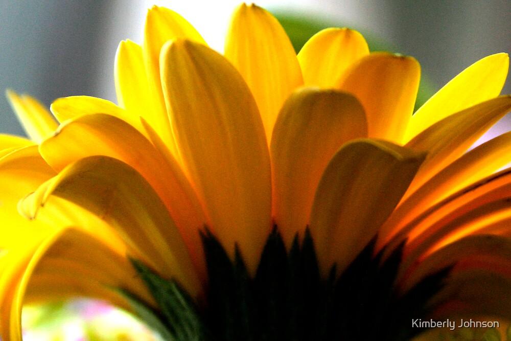 Sunny Yellow Daisy by Kimberly Johnson