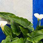 Blue Garden Contrasts - Calla Lilies Against the Wall Right by Georgia Mizuleva