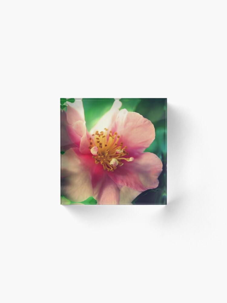 Alternative Ansicht von Kamelie In Pink Acrylblock
