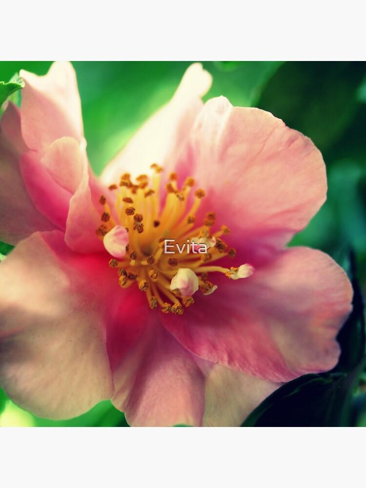 Kamelie In Pink von Evita