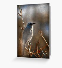 Scrub Jay  Greeting Card