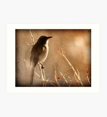 Scrub Jay - Winter Tree Art Print