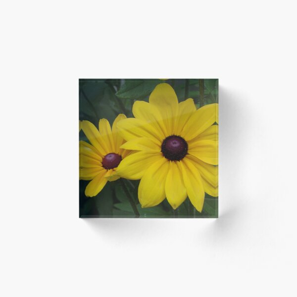 Black-Eyed Susans Acrylic Block