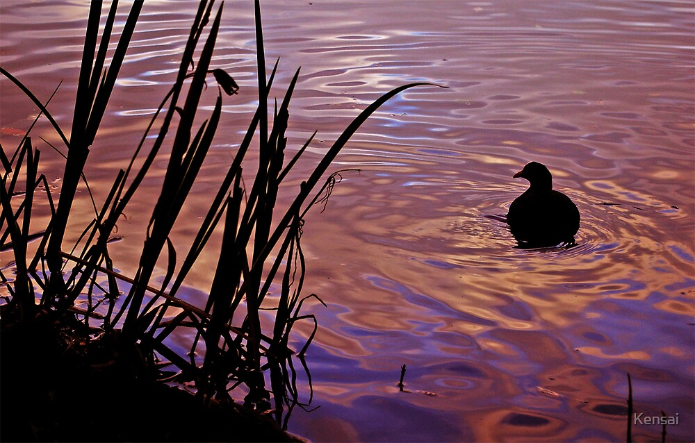 Duck settling at sunset by Kensai