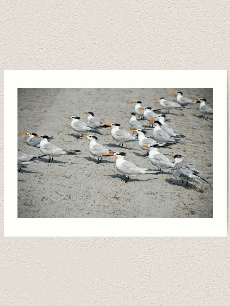 Alternate view of Orange Beak Brigade Art Print