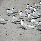 Orange Beak Brigade by photorolandi