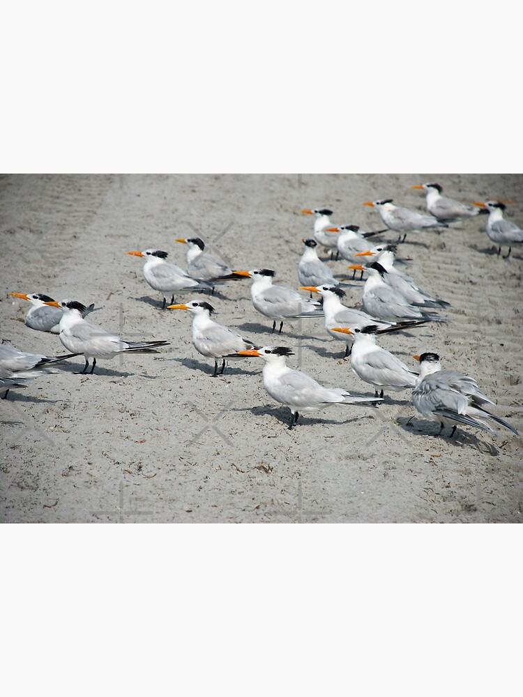 Orange Beak Brigade by photorolandi