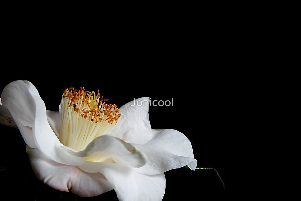 Winter Blossom by Jonicool