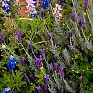 Bluebonnets and Lavender by Joe Hewitt