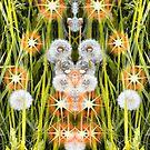 Teddy Bear Dandelions by kenspics