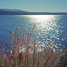 Roosevelt Lake in Color by James2001
