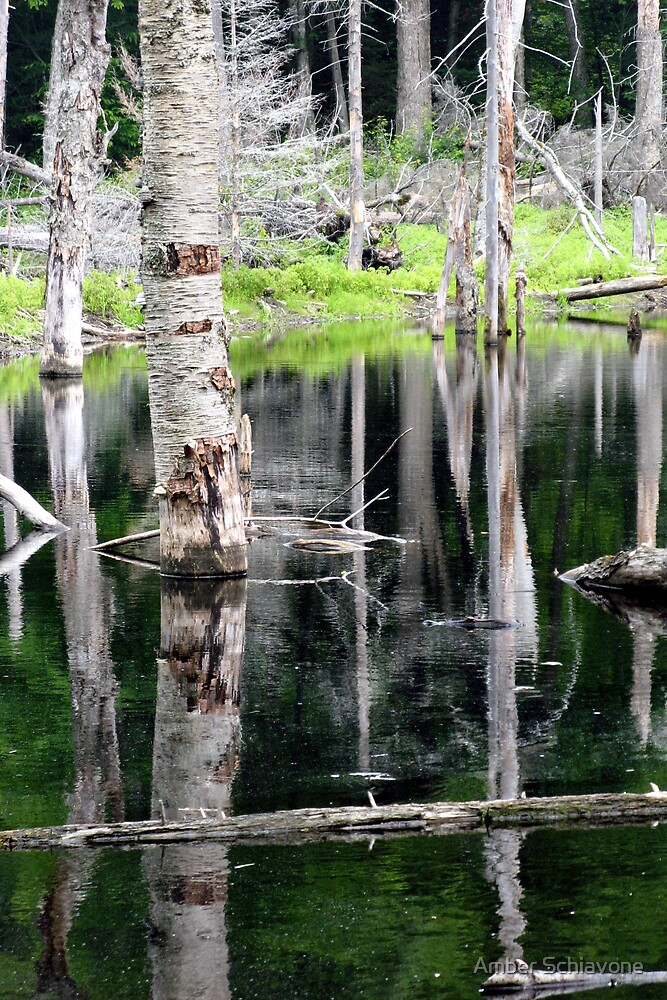 Adirondack pond by Amber Schiavone