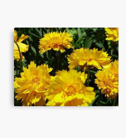Yellow Floral Abundance  Canvas Print