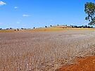 A Sunburnt Country by Graeme  Hyde