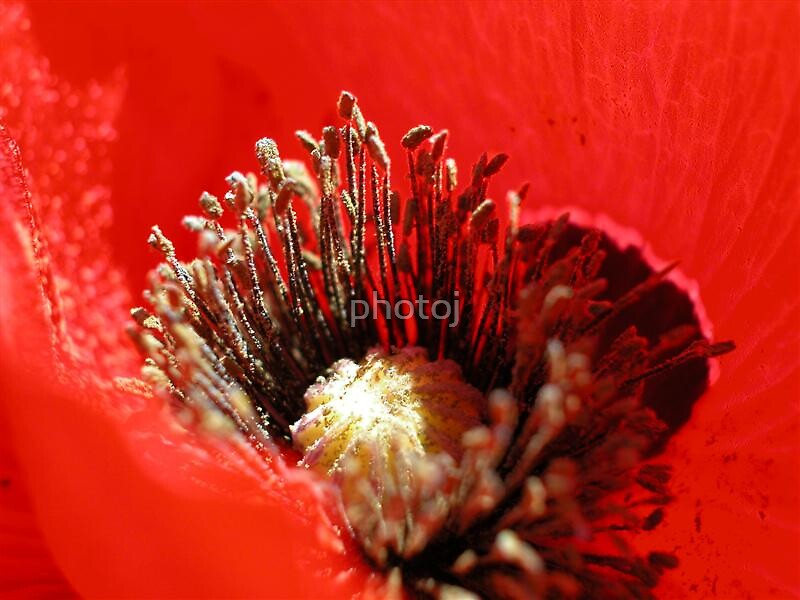 photoj macro flora by photoj