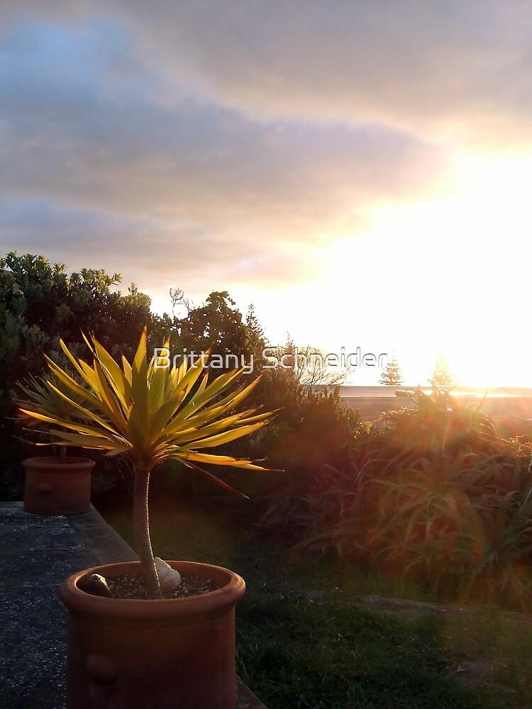 Paikakariki Sunset by Brittany Schneider