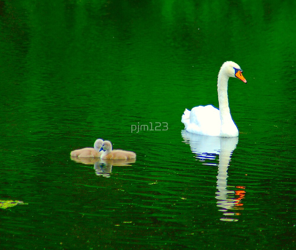 baby love by pjm123