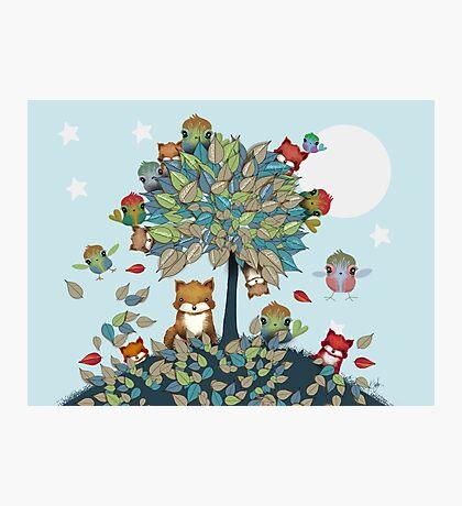The Friendship Tree Photographic Print